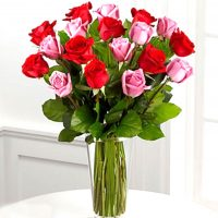 2 dz pink and red rose in a vase