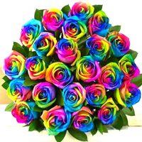 24 rainbow roses