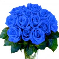 1 dz blue rose