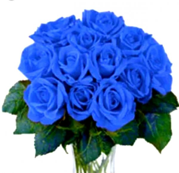 1 dz blue rose