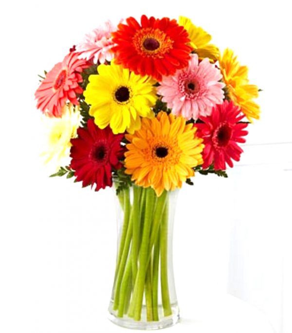12 Gerber daisy in a clear vase