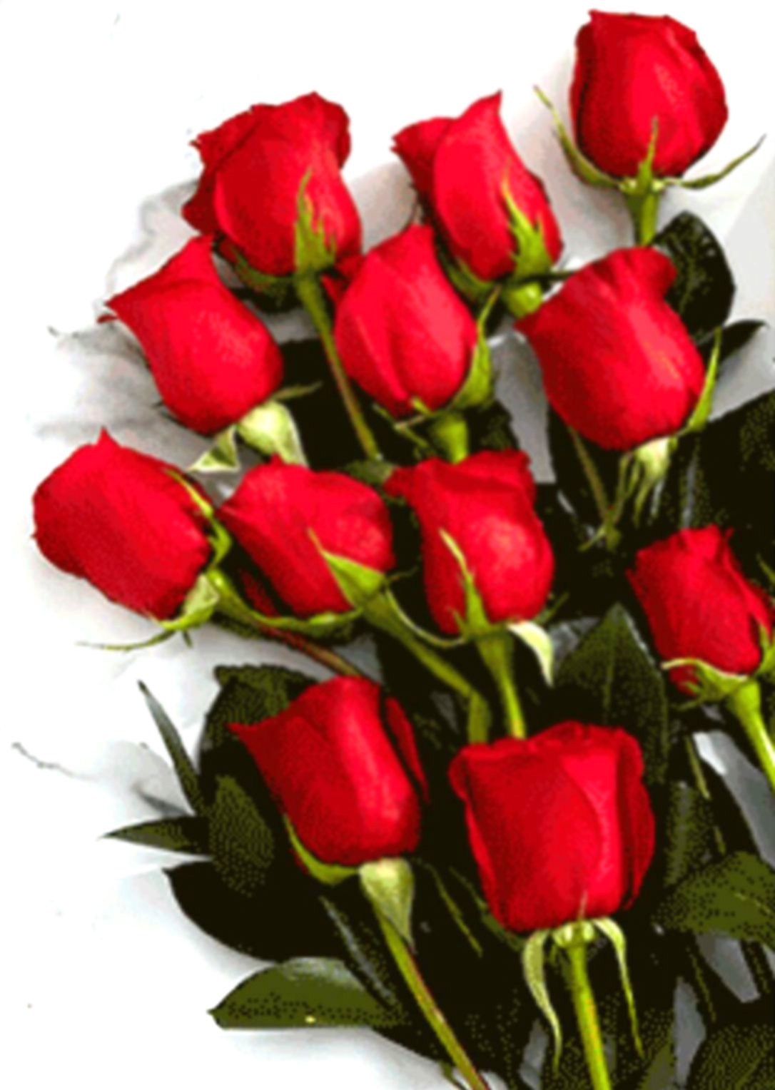 12 red roses in a bouquet sunlight flower shop 12 red roses in a bouquet izmirmasajfo