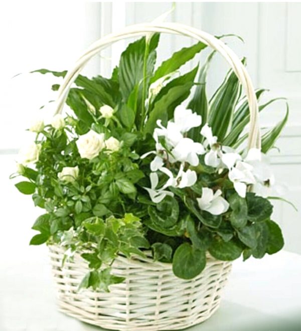 Dish Garden with Green Plants